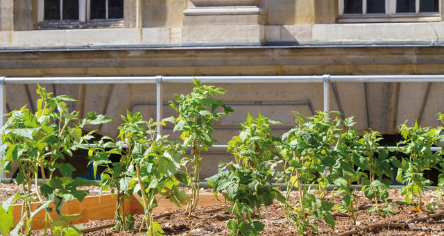Les nouveaux jardins suspendus