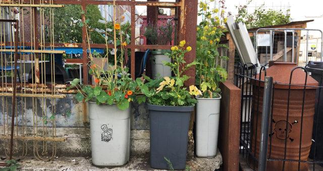 Le jardin en mode récup'