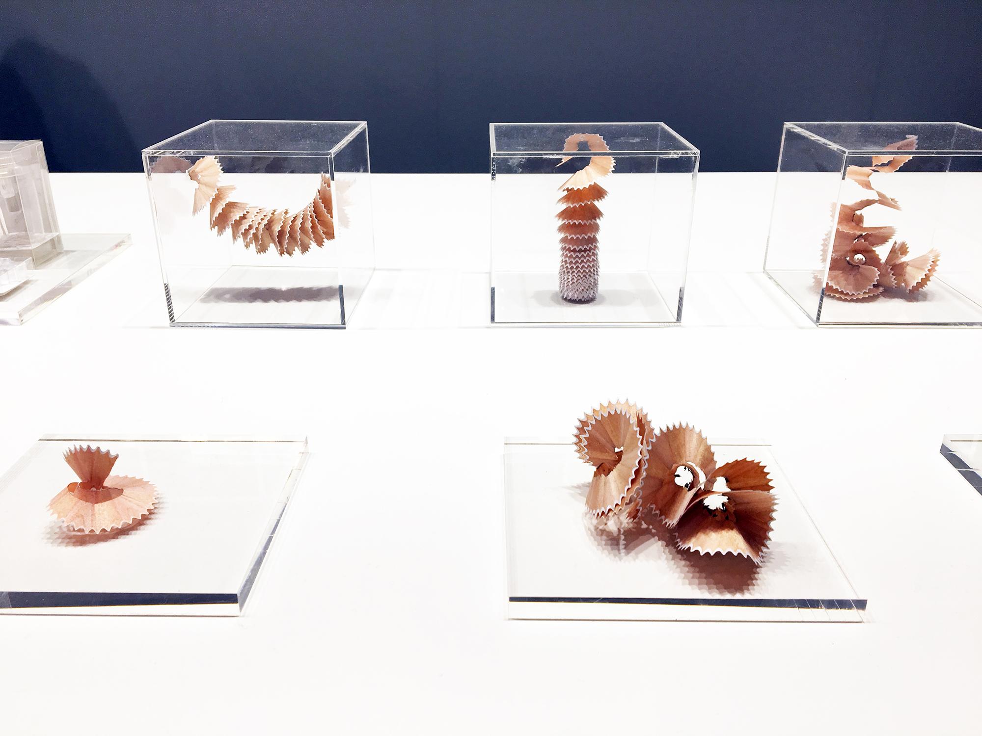 Des pelures de crayons à papier sont exposées comme des bijoux sur fond de plexiglass