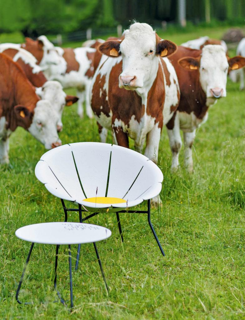 Une Chaise Grosfillex Yéyé 72 blanche est posée avec sa table basse dans un pré. A l'arrière plan 3 vaches normandes qui regardent l'objectif